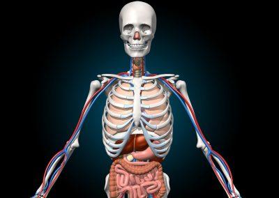 Réalité virtuelle et éducation - Découverte du corps humain